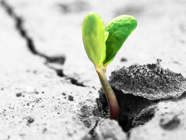 How to become resilient to maintain peak performance